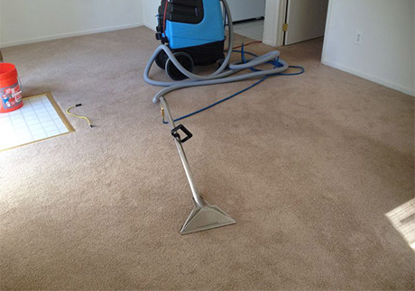 Spot Treatment And Grooming Treatment After Carpet Cleaning